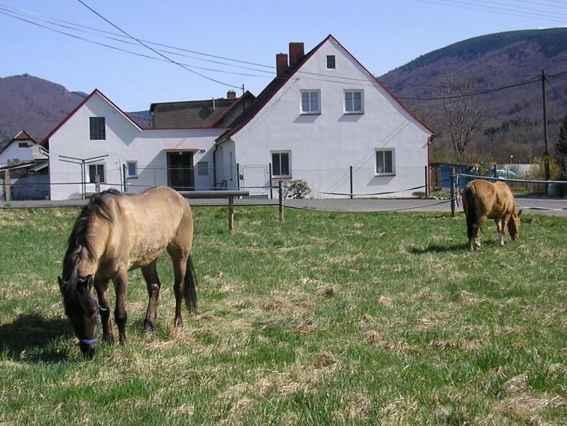 10.4. první koně v JS U Jelena